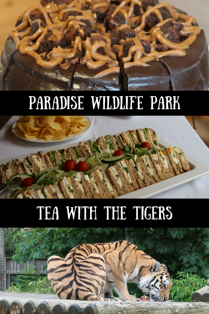 (AD) Tea with the tigers at Paradise Wildlife Park with Red Letter Days. We had a fantastic day out at this zoo in Broxbourne, Hertfordshire