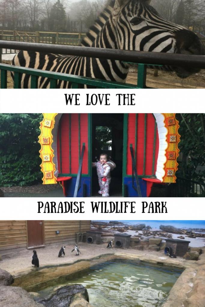 Zebra, travelling wagon and penguin enclosure at Paradise Wildlife Park