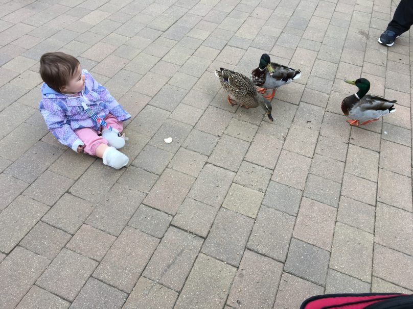 Daisy playing with the ducks at the exact moment she was born one year before!
