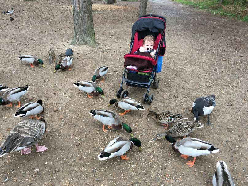 Daisy enjoying the ducks on holiday at Centerparcs at 14 months old