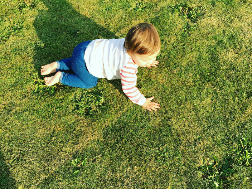 Daisy exploring the grass outside our home at 14 months old