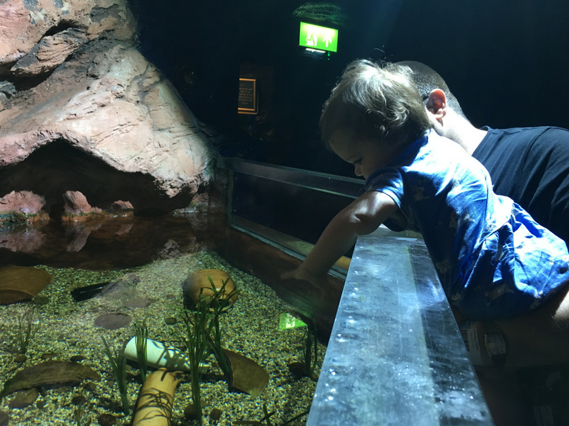 Daisy trying to play with the fish at Sealife Adventure Southend