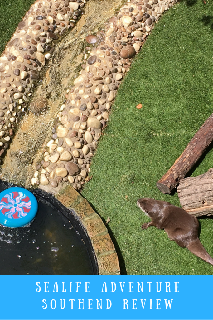 The otters at Southend Sealife Adventure and text overlay that says Sealife Adventure Southend Review