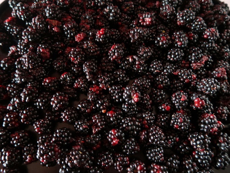 Blackberries on a flat cookie sheet ready for freezing