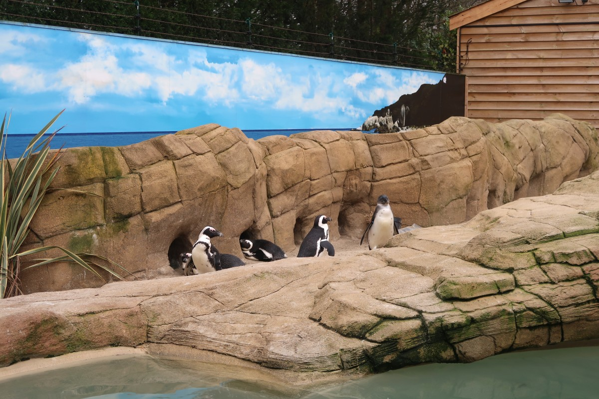 Penguins at Paradise Wildlife Park