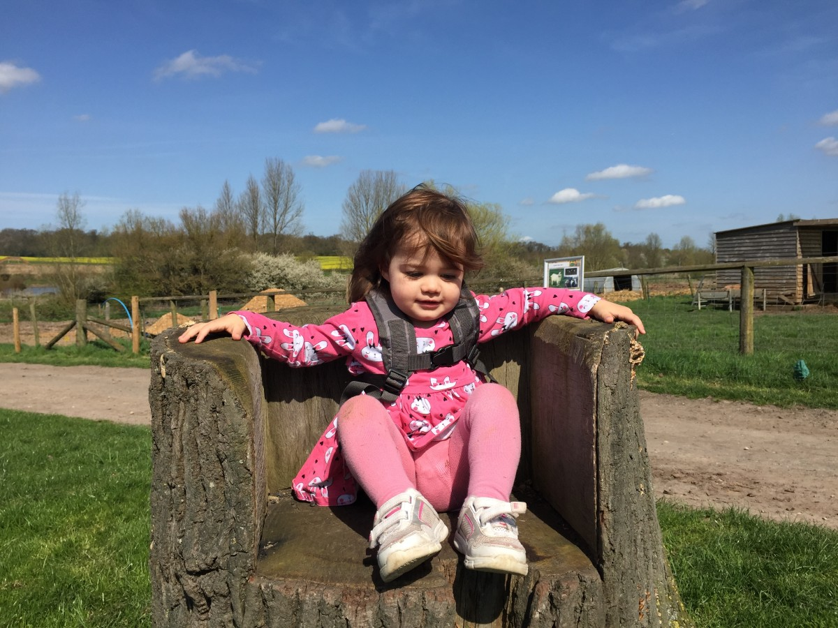 Daisy sitting on a chair at Willow's Farm