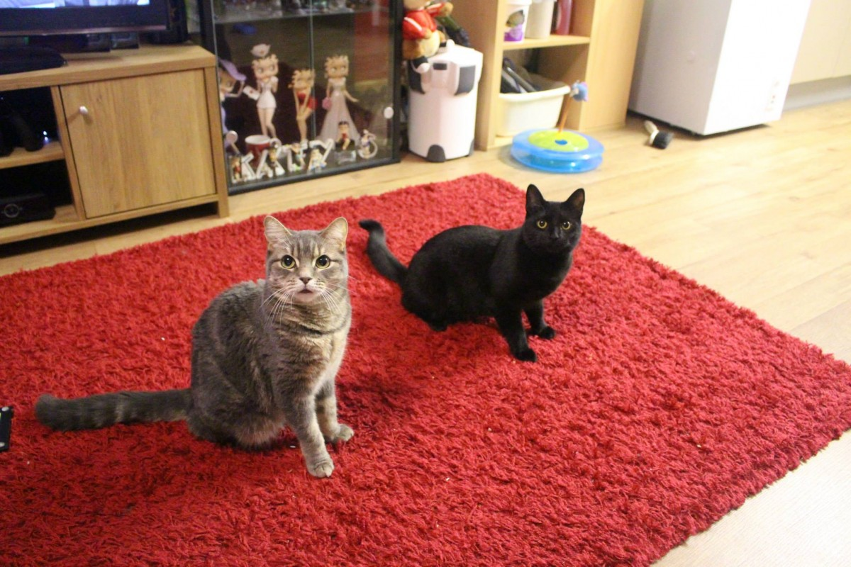 My Purrfect date night with Izzy and Whiskas cat casseroles - Izzy and Jazz