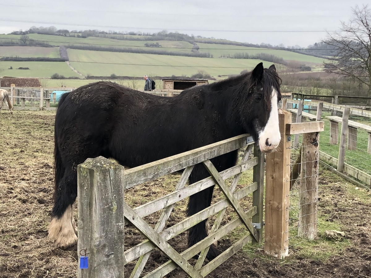 A horse in a paddock at Lee Valley Park Farm